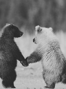 bears holding hands